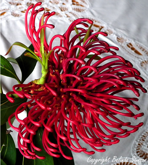 Waratahs from the Tasmanian Craft Fair by Belinda Stinson of Creatively Belle